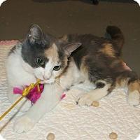 Adopt A Pet :: Velvet - Geneseo, IL