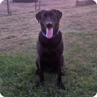 Adopt A Pet :: Lynch - Chewelah, WA