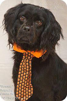 Cocker Spaniel Mix Dog for adoption in Newnan City, Georgia - Sammie