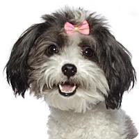 Adopt A Pet :: Princess (plus Bella) - Oakland Park, FL