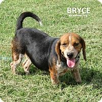 Adopt A Pet :: Bryce   URGENT - Elizabeth City, NC