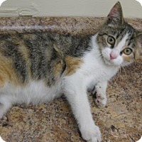 Adopt A Pet :: Kitty - Gary, IN