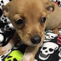 Adopt A Pet :: Violet - DeForest, WI