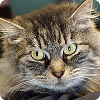 Adopt A Pet :: Jada - Sprakers, NY