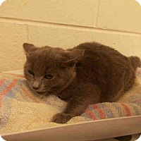 Adopt A Pet :: *LAUREN - Upper Marlboro, MD