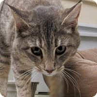 Adopt A Pet :: Cici - Grinnell, IA