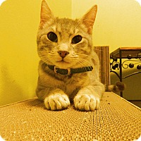 Adopt A Pet :: Sebastian - The Colony, TX