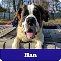 Adopt A Pet :: Han - Armonk, NY