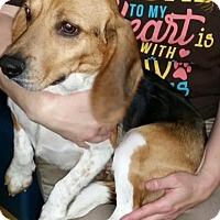 Adopt A Pet :: Jolene - Irmo, SC