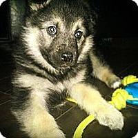 Adopt A Pet :: Bella - Saskatoon, SK
