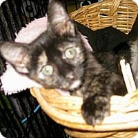 Adopt A Pet :: M&M - Dallas, TX
