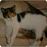 Adopt A Pet :: Sarah - Brea, CA