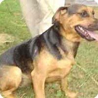 Adopt A Pet :: 3 Stooges - latrobe, PA