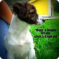 Adopt A Pet :: Molly - Gadsden, AL
