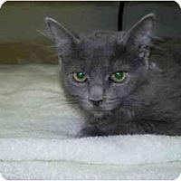 Adopt A Pet :: Missy - San Ramon, CA