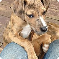 Adopt A Pet :: PEPPER-JJ - Roundup, MT