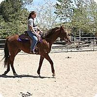 Adopt A Pet :: Pedlars Way - Pinon Hills, CA