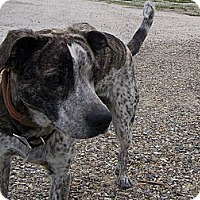 Adopt A Pet :: Patches - Chewelah, WA