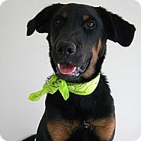 Adopt A Pet :: Jett - Monteregie, QC
