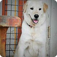 Adopt A Pet :: Alli - Austin, TX