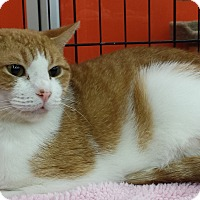 Adopt A Pet :: Summer (DH) - Little Falls, NJ