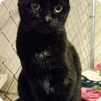 Adopt A Pet :: Misses Little - Scottsboro, AL