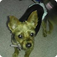 Adopt A Pet :: Elsie - Rochester, MN