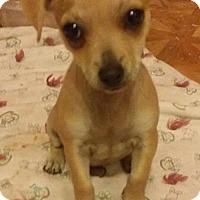 Adopt A Pet :: TaTa - Aurora, CO