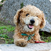Adopt A Pet :: Drake - Los Angeles, CA
