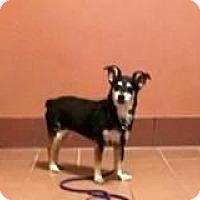 Adopt A Pet :: Sadie - Baraboo, WI