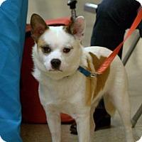 Adopt A Pet :: Milo - Round Lake Beach, IL