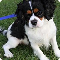 Adopt A Pet :: FENTON - Newport Beach, CA