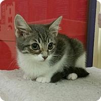 Adopt A Pet :: Jill - Phoenix, AZ