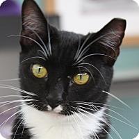 Adopt A Pet :: Gemini - Sarasota, FL