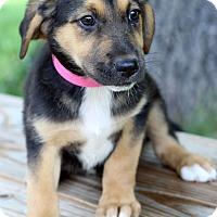Adopt A Pet :: Keisha - Waldorf, MD