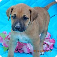 Adopt A Pet :: Kona (7 lb) Video! - SUSSEX, NJ