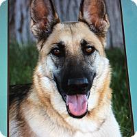 Adopt A Pet :: CHANEl VON CHIRUG - Los Angeles, CA
