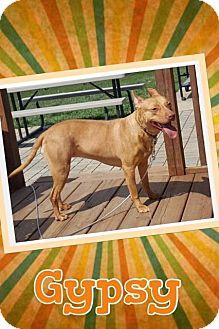 Carolina Dog Dog for adoption in Mauston, Wisconsin - Gypsy