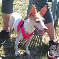 Adopt A Pet :: Lexi ! - Mastic Beach, NY