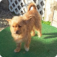Adopt A Pet :: Toffee - Pardeeville, WI
