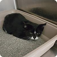 Adopt A Pet :: Auburn - Cody, WY