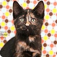 Adopt A Pet :: Yerba - Sterling Heights, MI