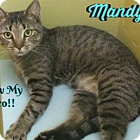 Adopt A Pet :: Mandy - Sarasota, FL