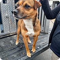 Adopt A Pet :: 58116 Time Up - Franklin, GA