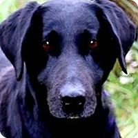 Adopt A Pet :: MISS DESTIN(WHAT A SAD STORY!! - Wakefield, RI
