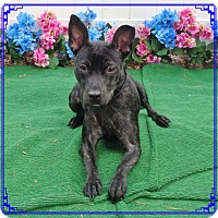 Adopt A Pet :: IRIS - Marietta, GA