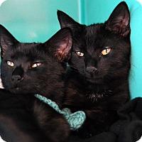 Adopt A Pet :: Spanky - Richmond, VA