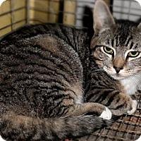 Adopt A Pet :: Grumpy - Duncan, BC