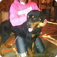 Adopt A Pet :: Boss - Stilwell, OK