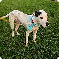 Adopt A Pet :: Brady - Tampa, FL